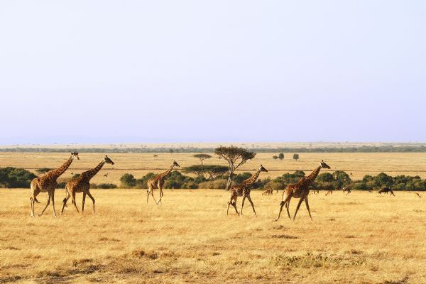 Masai Mara National Reserve Game Viewing on Life Cycles In Nature