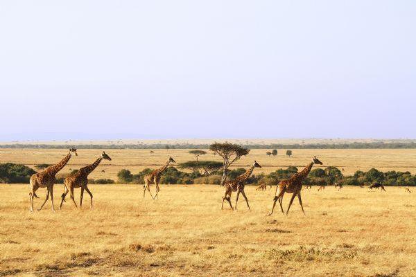 mara land large reserve