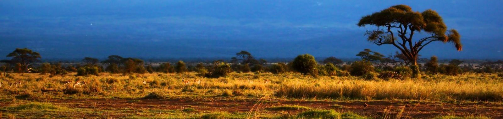 Across East African Plains