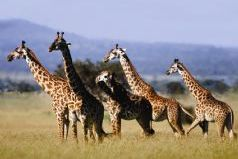 Ultimate Southern Africa Safari