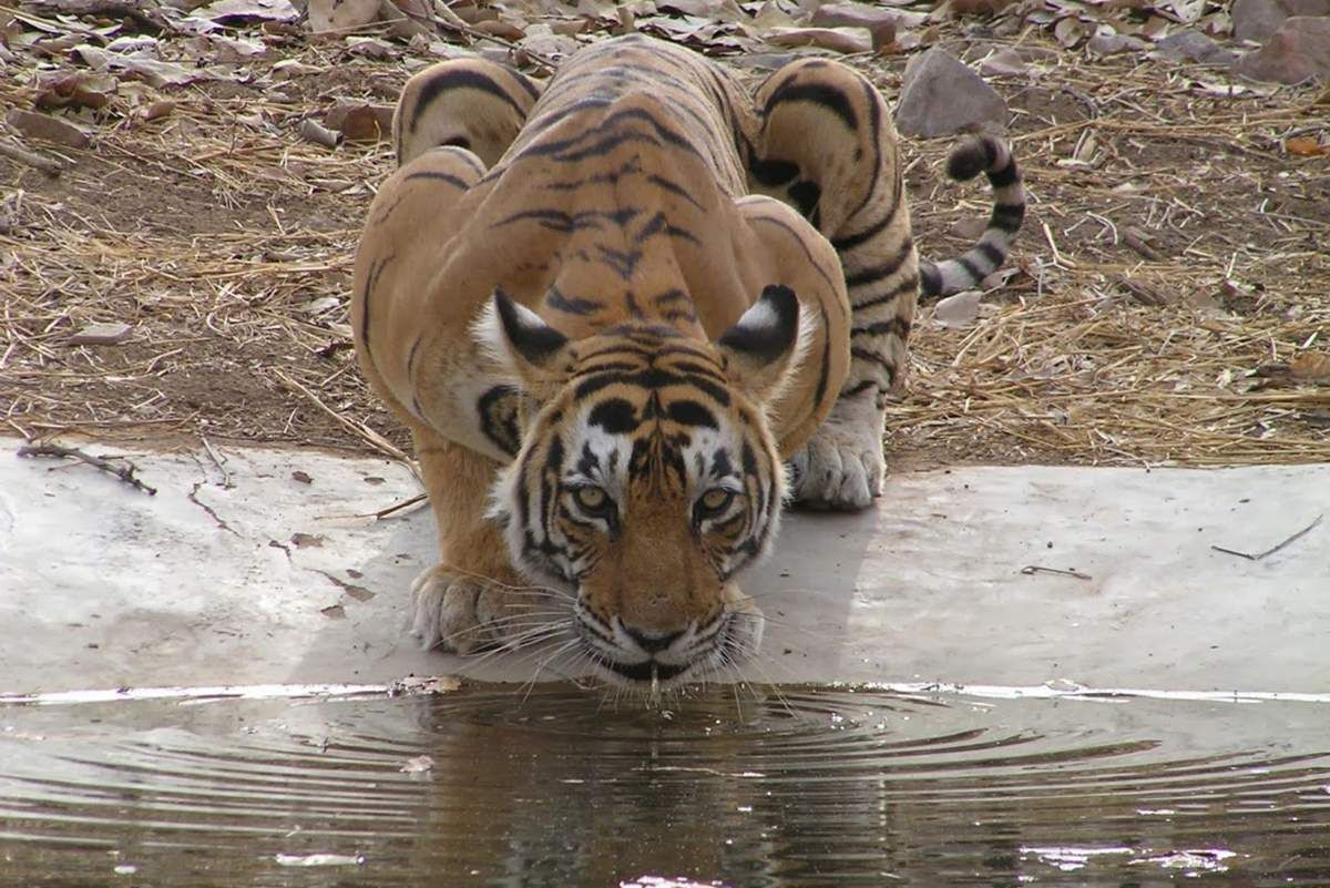 Exclusive Jeep Safari at Ranthambhore