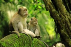 Royal Temple, Monkey Forest and Floating Temple tour