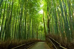 Sagano-Arashiyama Walking Tour
