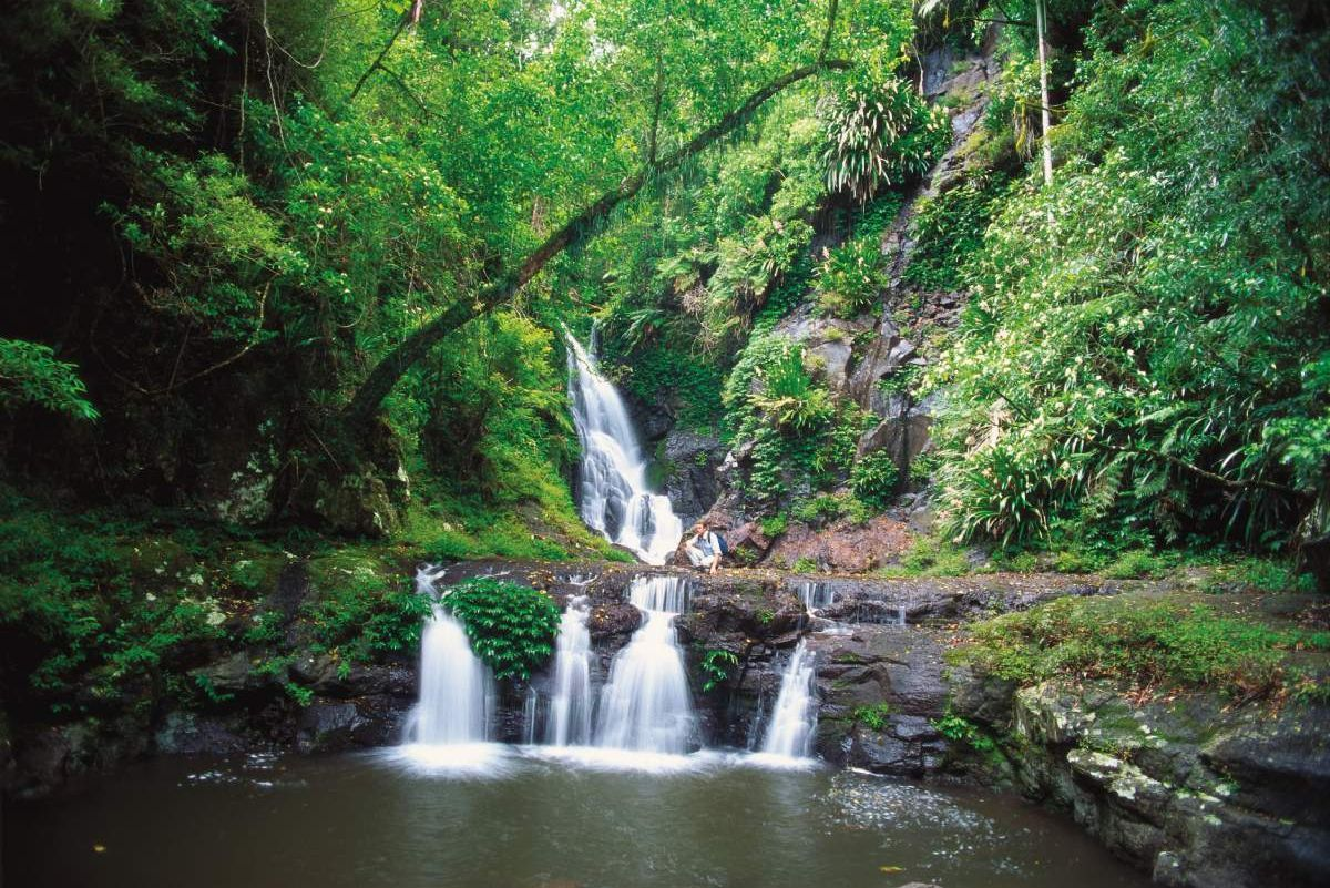 O Reilly S Amp Lamington National Park Brisbane