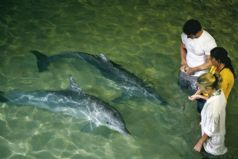 Tangalooma Dolphin Adventure