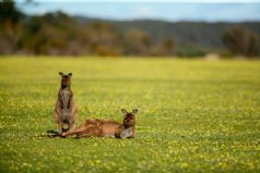 Wine & Wildlife in Australia