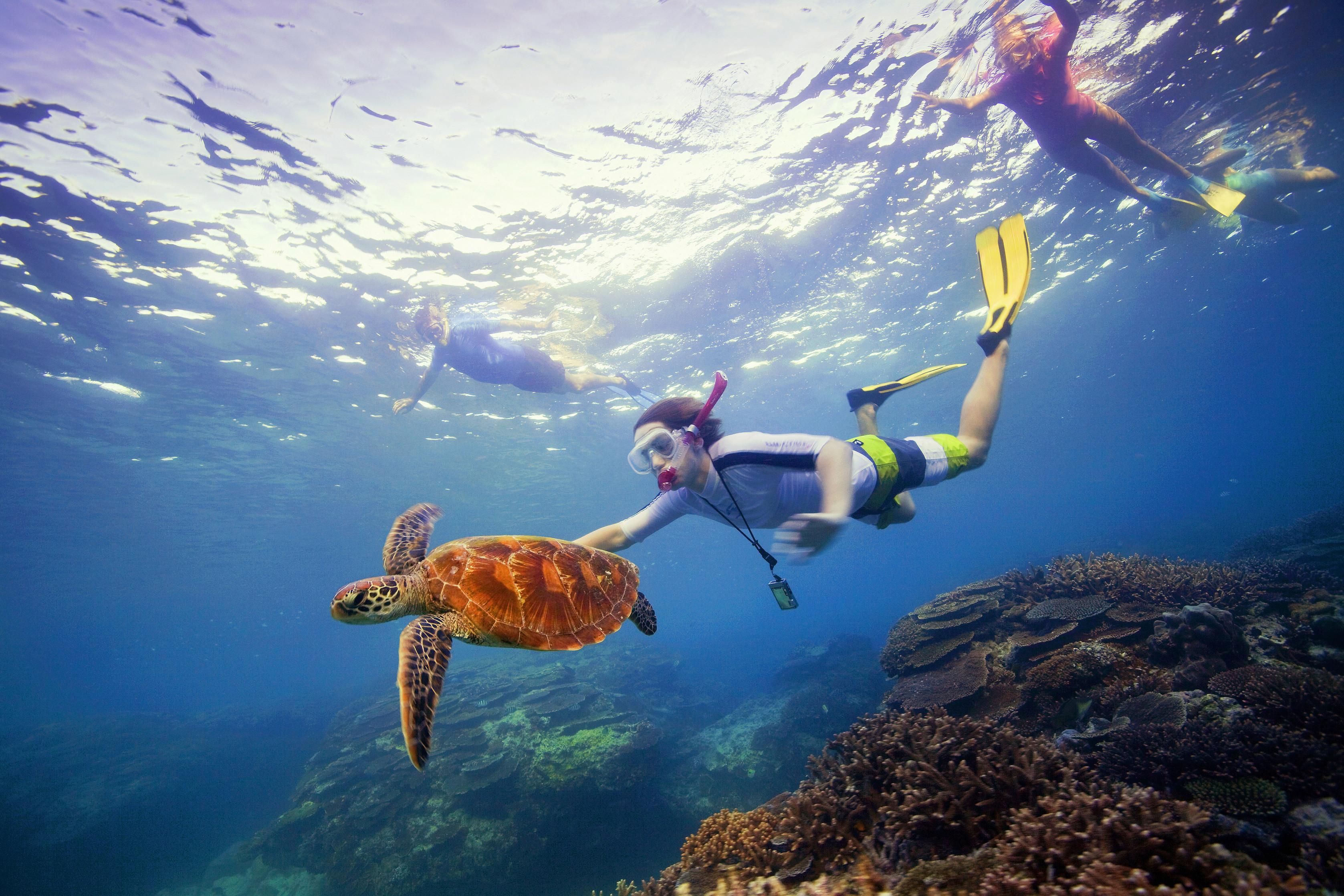 GBR_diving_tourismaustrlia