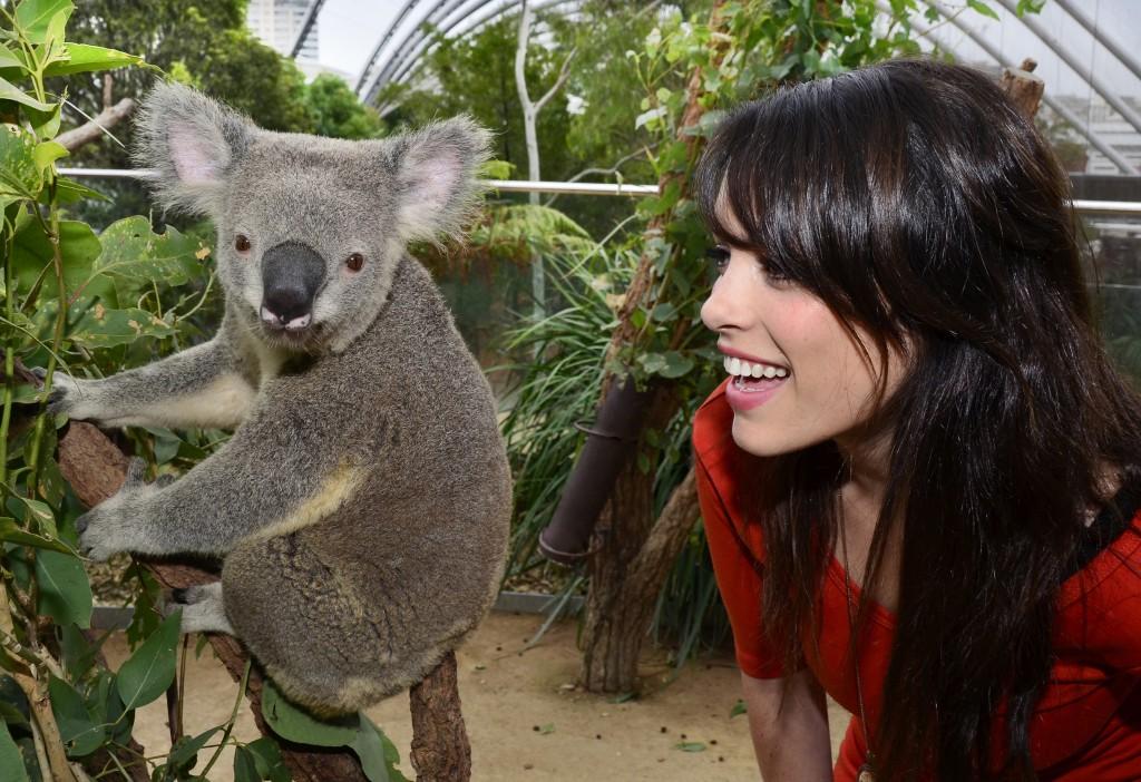 Koala at WILDLIFE Sydney