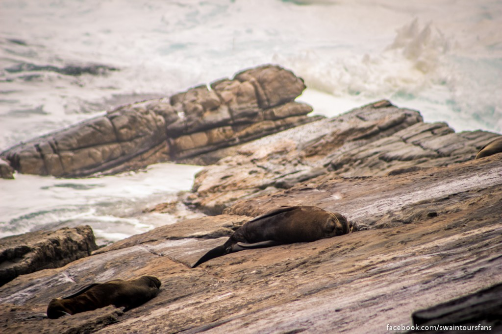 Seals at Admiral's Arch
