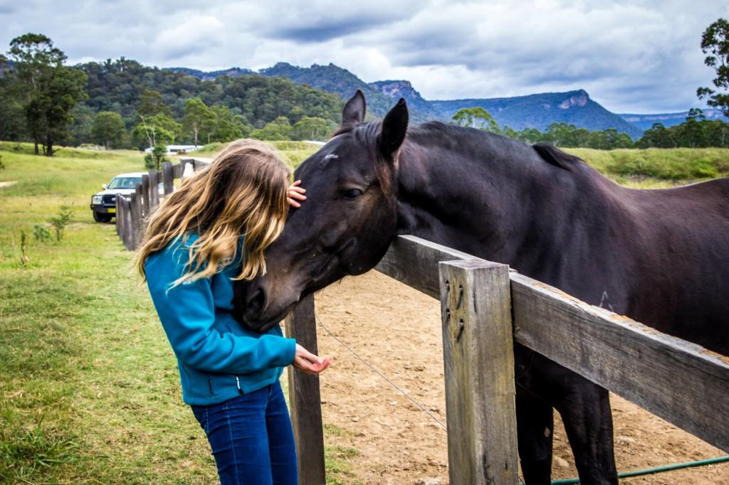 Wolgan Valley Horses