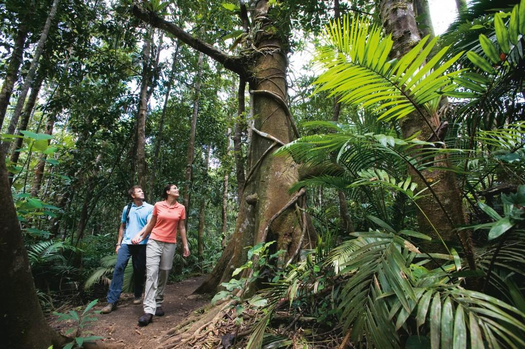 Rainforest around Ellinjaa Falls Photo Credit: Tourism Queensland