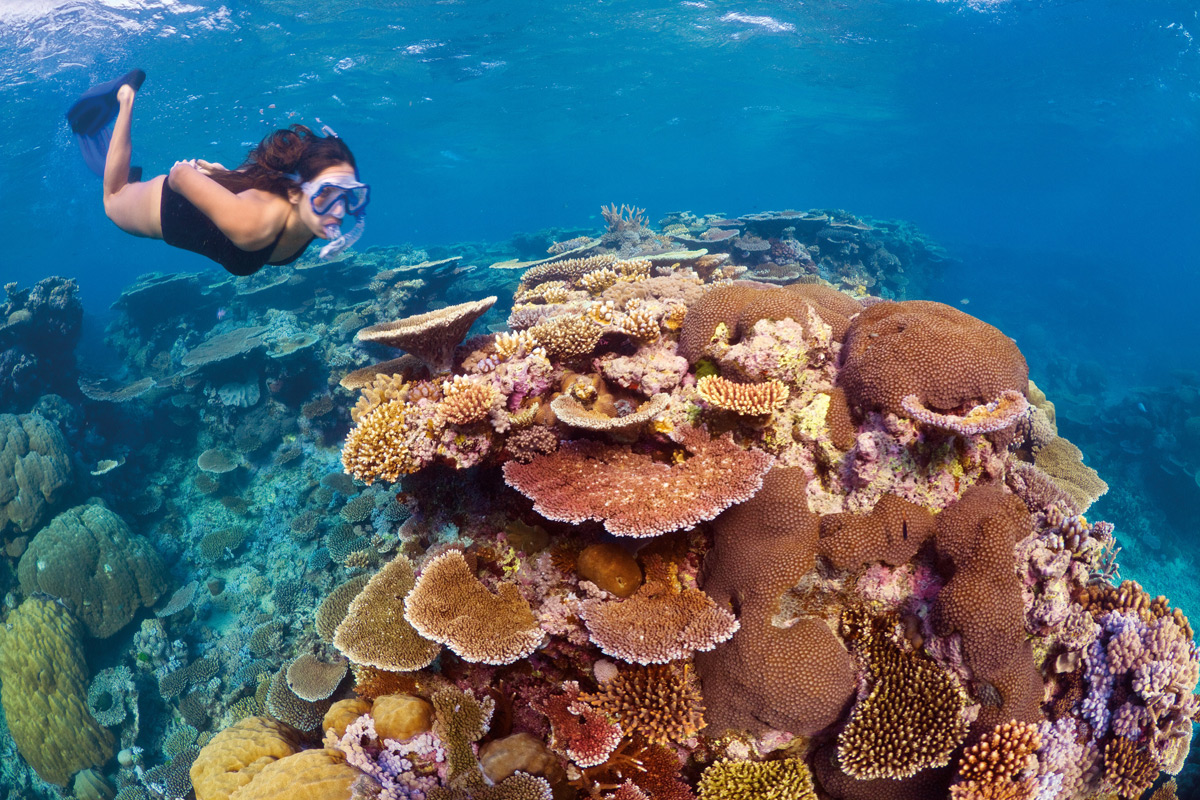 Diving in the Great Barrier Reef | Photo Credit: Tourism Queensland