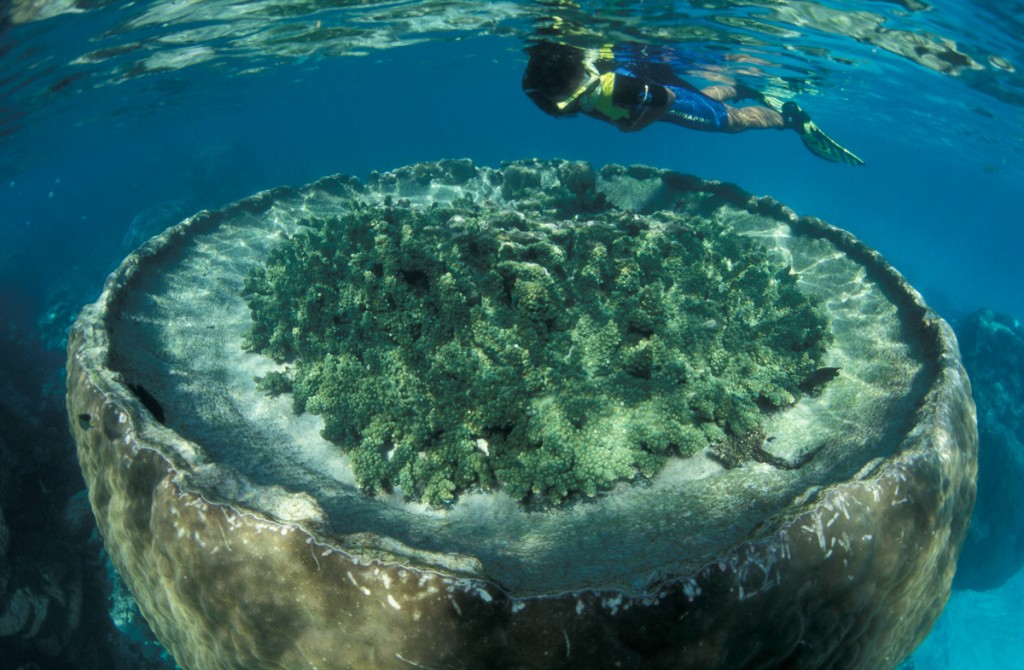 Blue Lagoon snorkel area, Sal Salis Ningaloo Reef | Photo Credit: Sal Salis