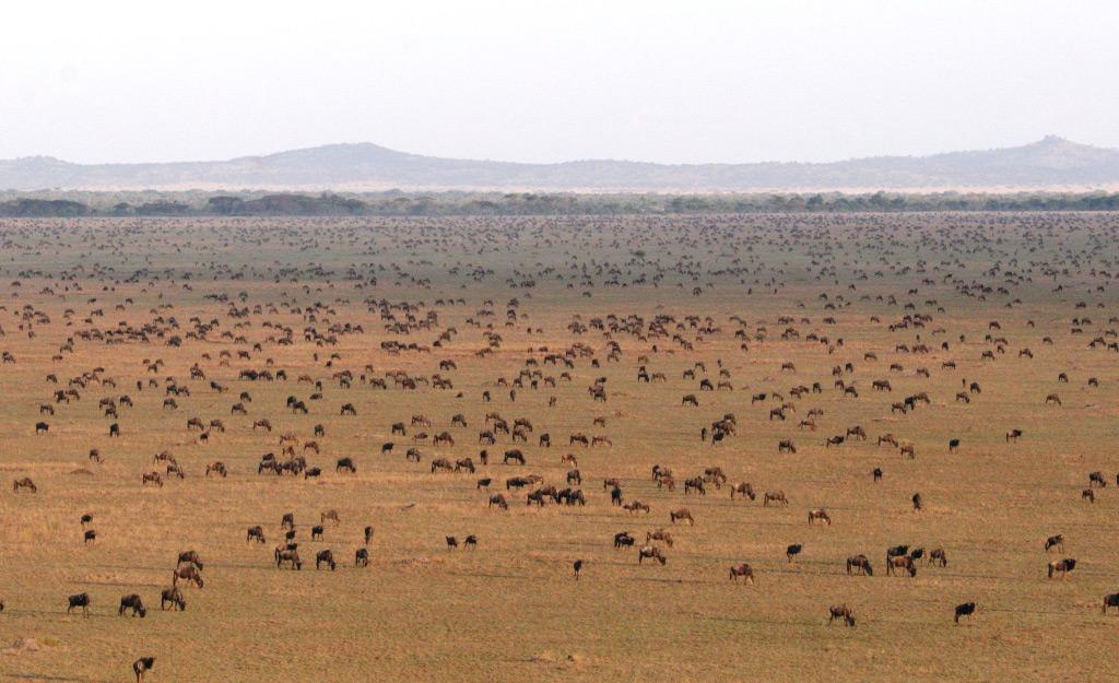 Great Migration | Photo Credit: Singita Sasakwa Lodge