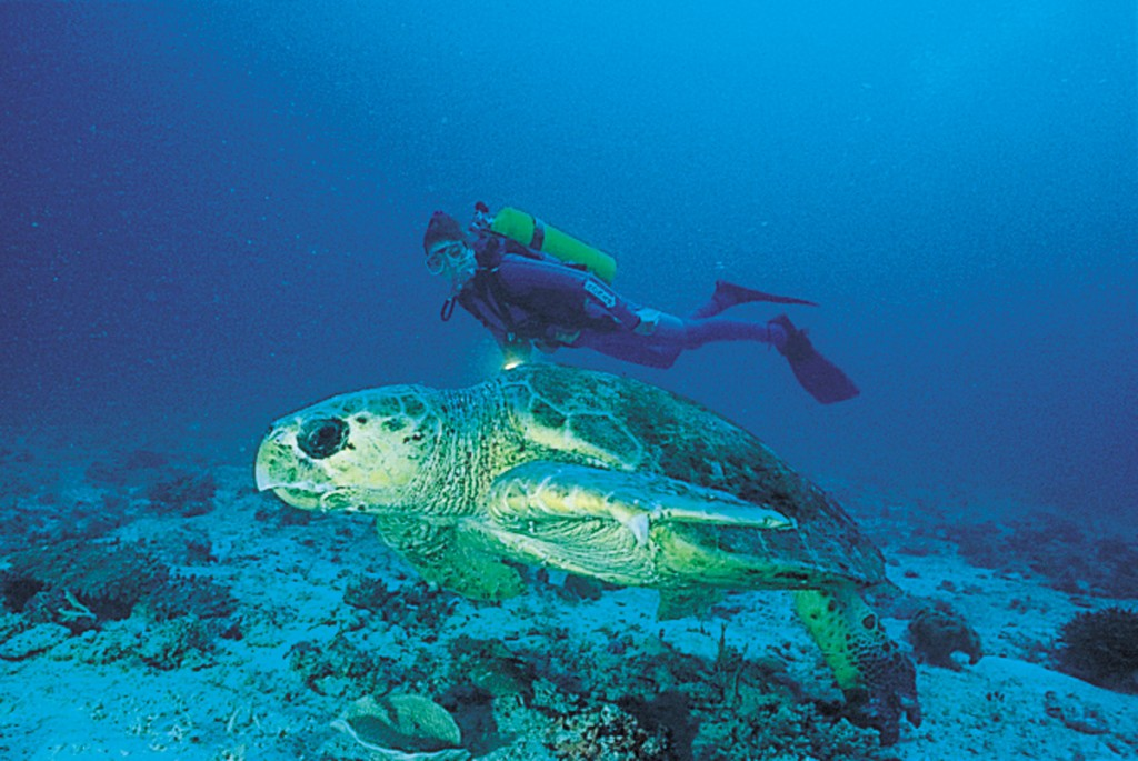 Scuba Diving with a Giant Turtle | Photo  Credit: Heron Island