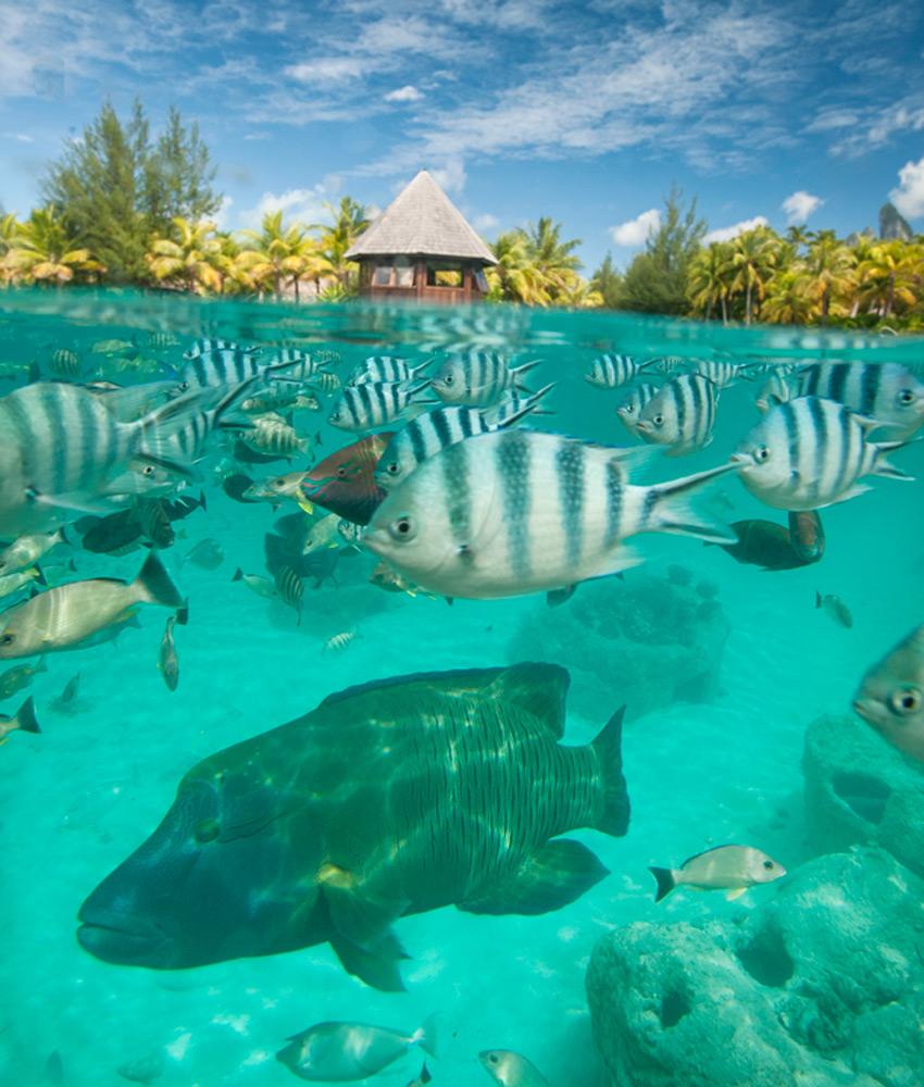 Marine Life   Photo Credit: St. Regis Bora Bora