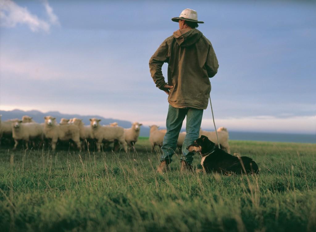 Shepherd | Photo Credit: Wharekauhau Lodge