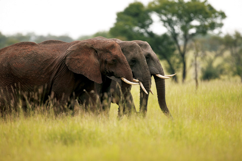Elephants | Photo Credit: Singita
