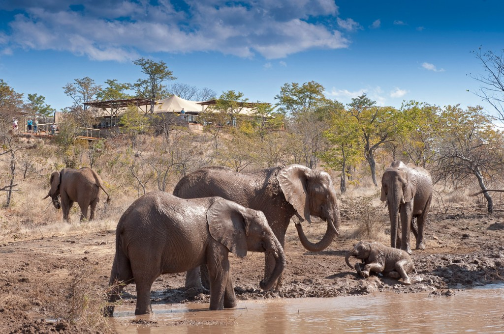 Elephants at the Watering Hole | Photo Credit: The Elephant Camp