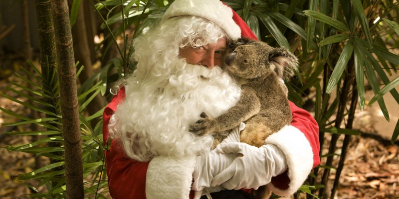 Santa with a Koala | Photo Credit: Tourism and Events Queensland