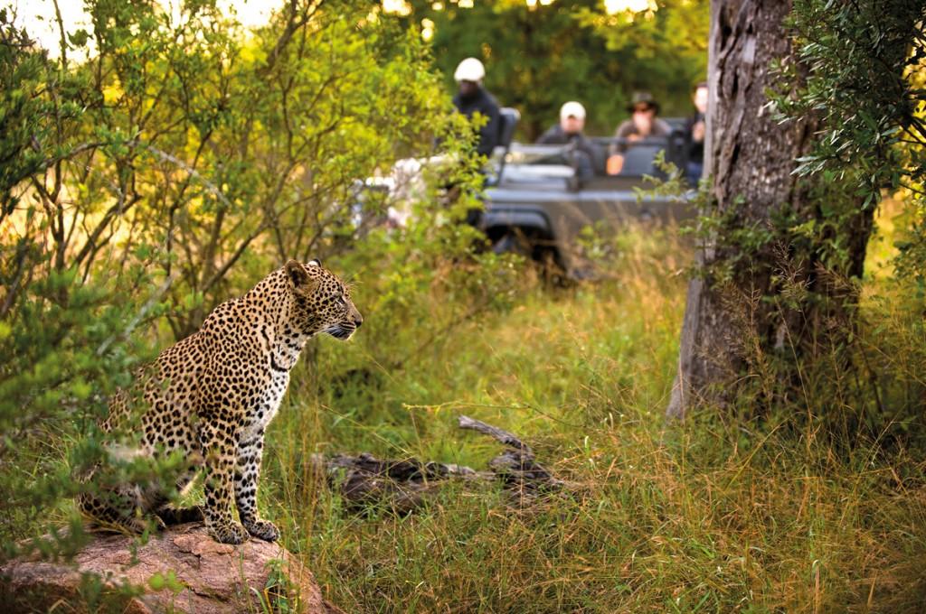 Leopard | Photo Credit: Lion Sands