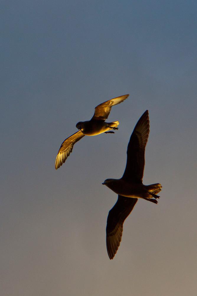 Abundant Birdlife | Photo Credit: Capella Lodge