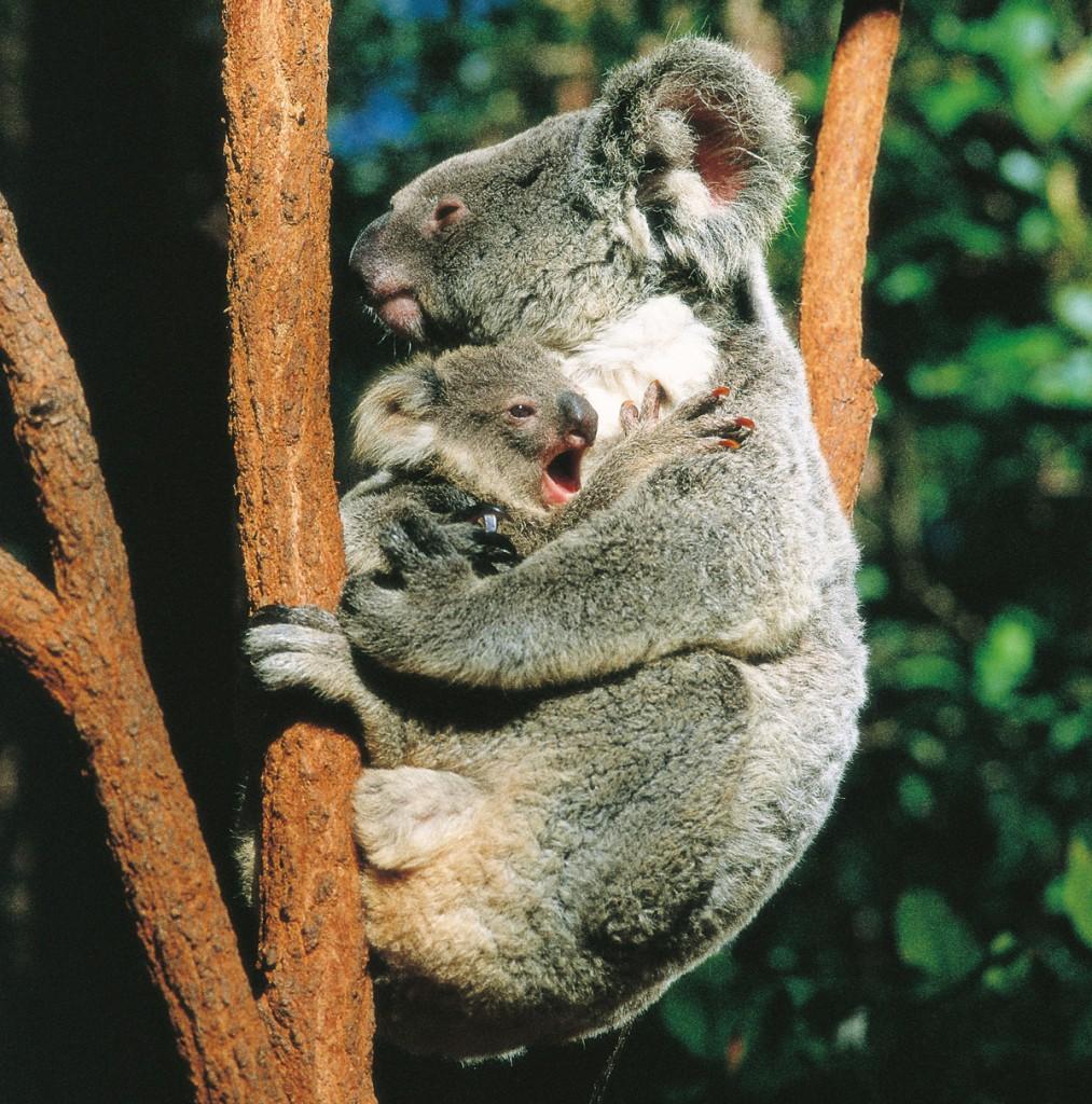 Billabong Sanctuary   Photo Credit: Tourism and Events Queensland