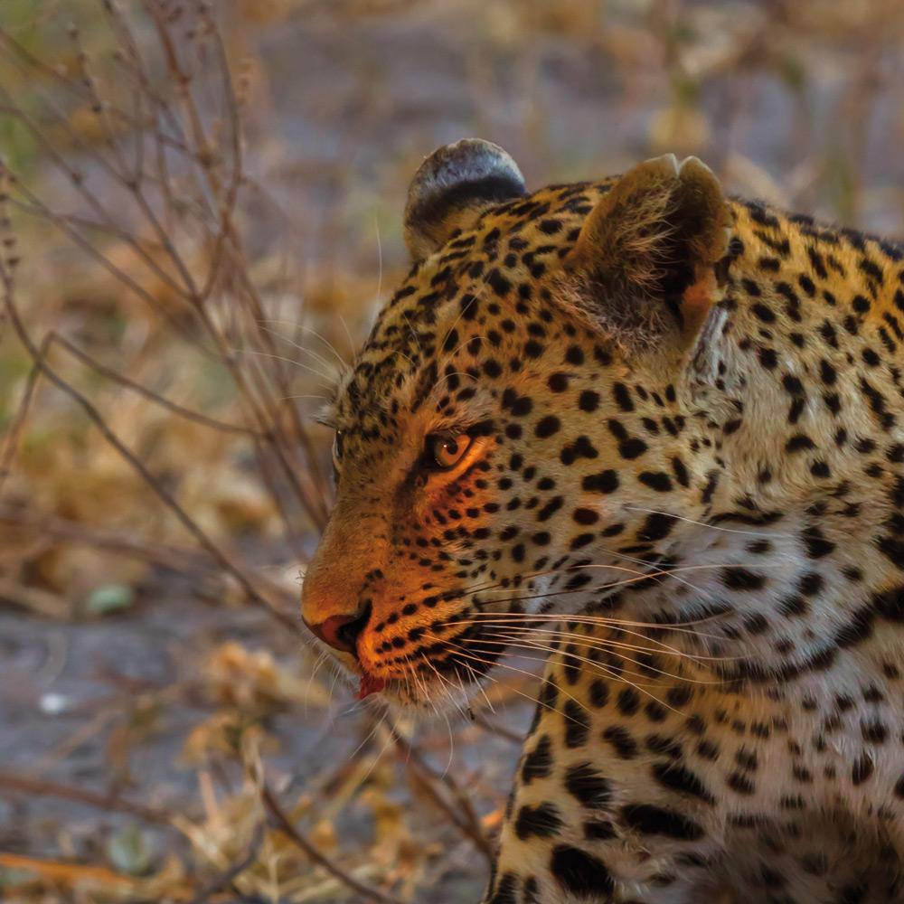 Wildlife | Photo Credit: Savute Elephant Camp