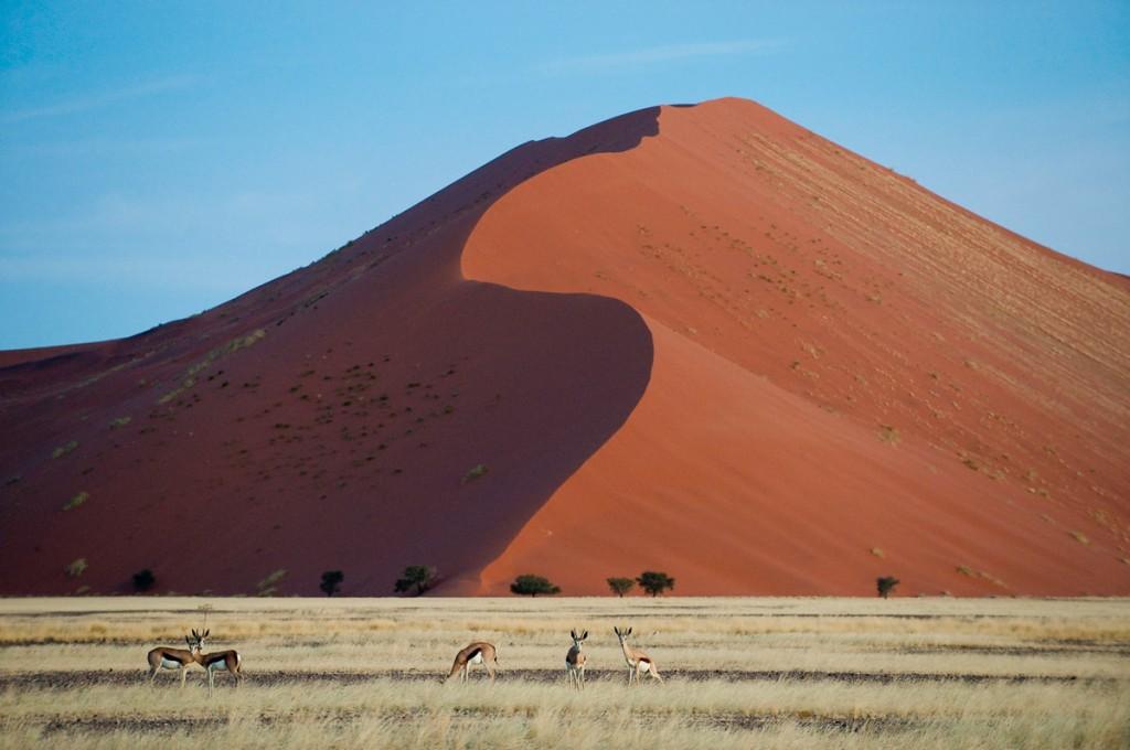 "The Formidable ""Big Daddy"" Dune in Sossusvlei | Photo Credit: Wilderness Safaris"