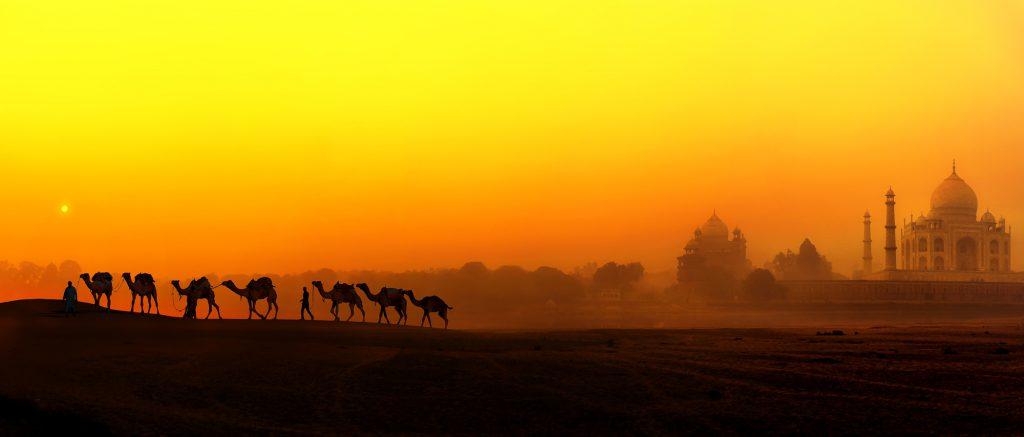 ss-india-taj-camels-web