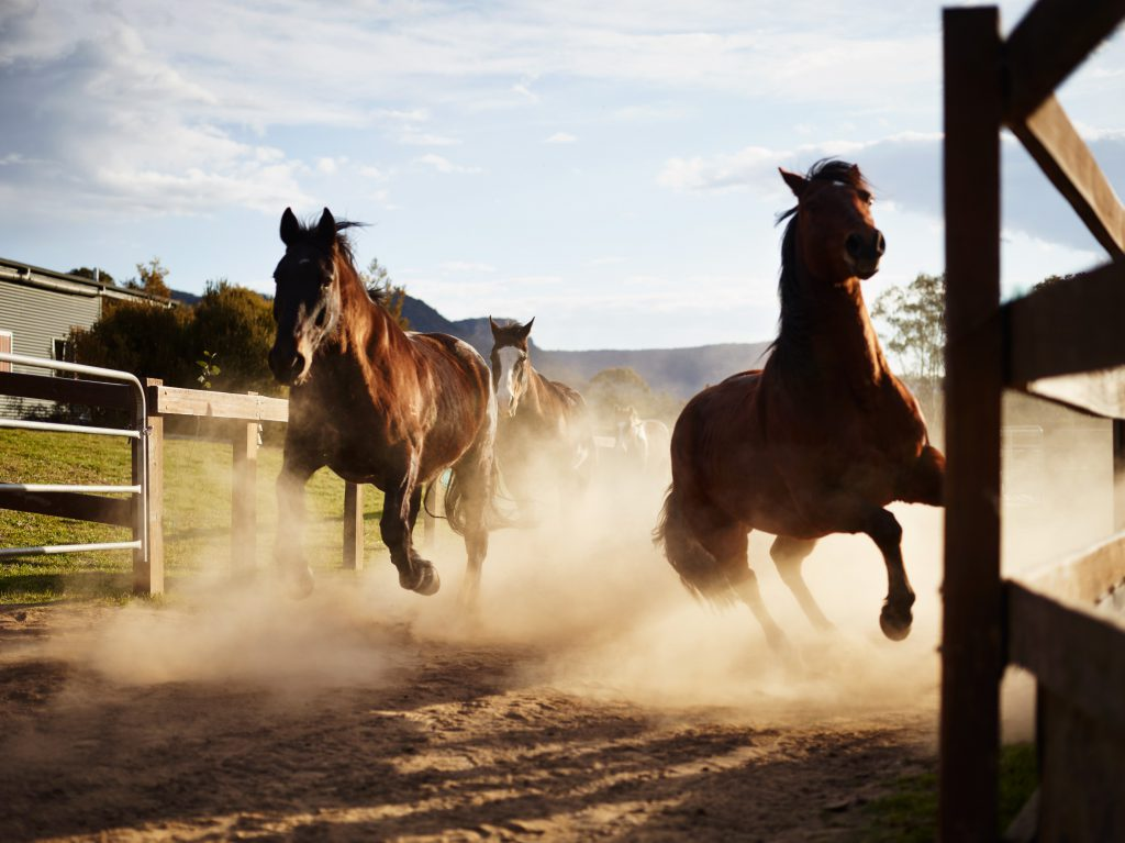 Horses | Photo Credit: Wolgan Valley Resort & Spa