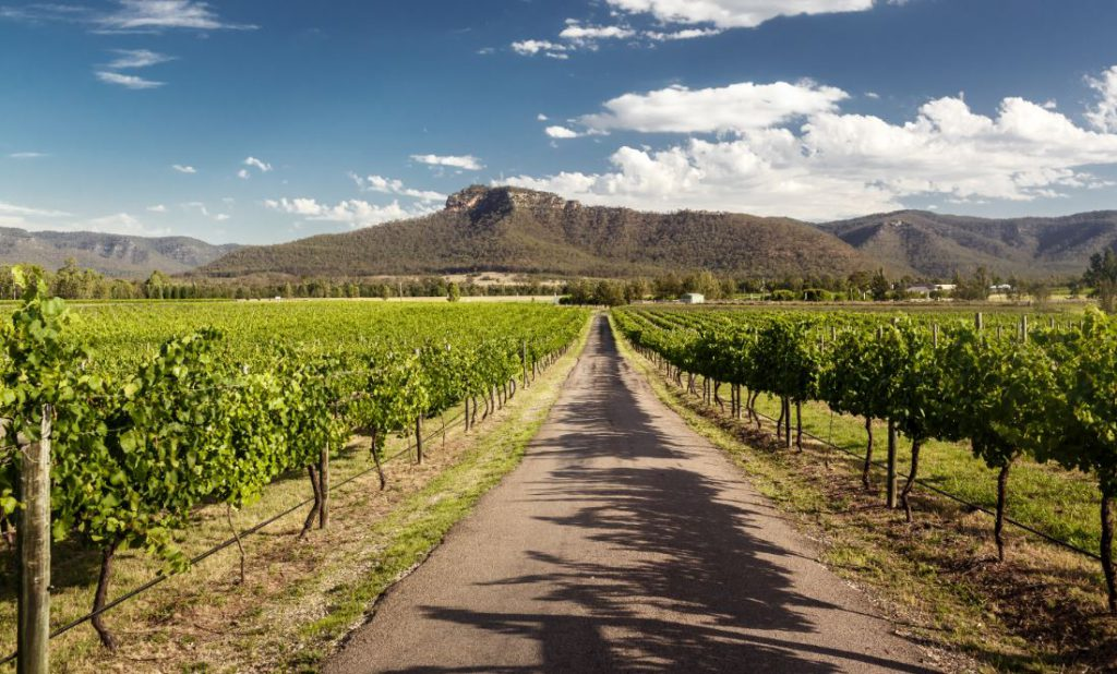 The Hunter Valley | Photo Credit: Mount'N Beach Safaris