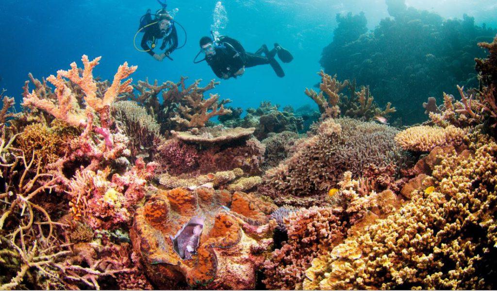 Diving | Photo Credit: Lizard Island: Tourism Queensland