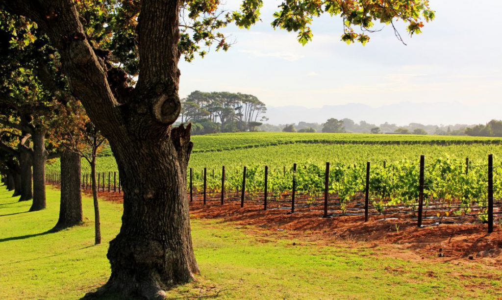 Constantia Grounds | Photo Credit: Groot Constantia