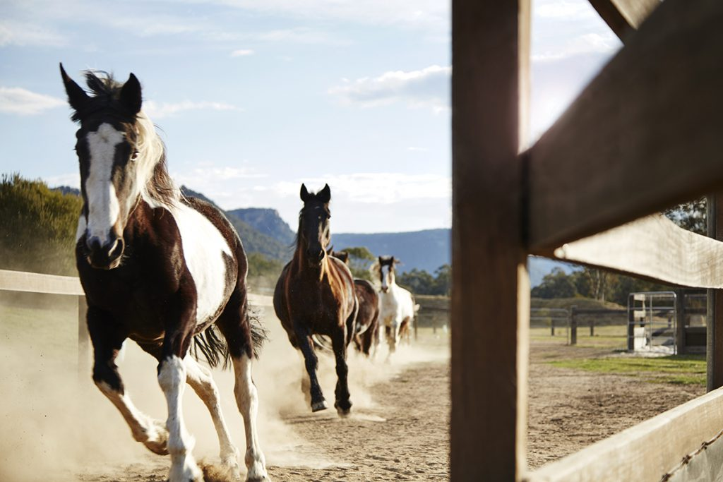 Horses | Photo Credit: Emirates One&Only Wolgan Valley