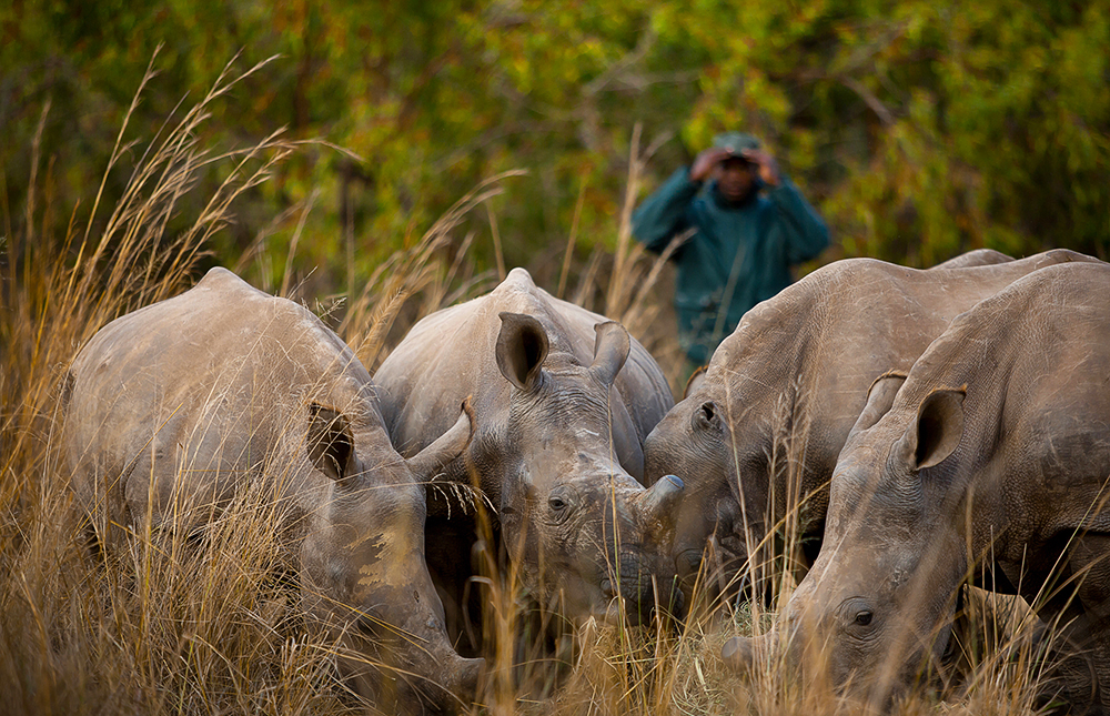 Photo Credit: Care for Wild Rhino Sanctuary