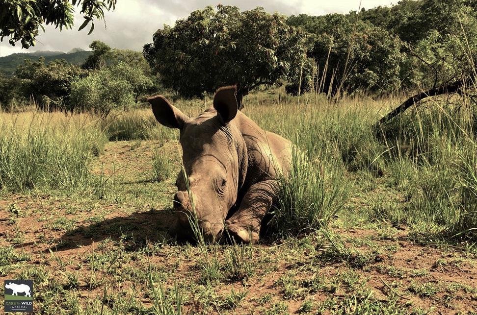 Photo Credit: Care for Wild Rhino Sanctuary