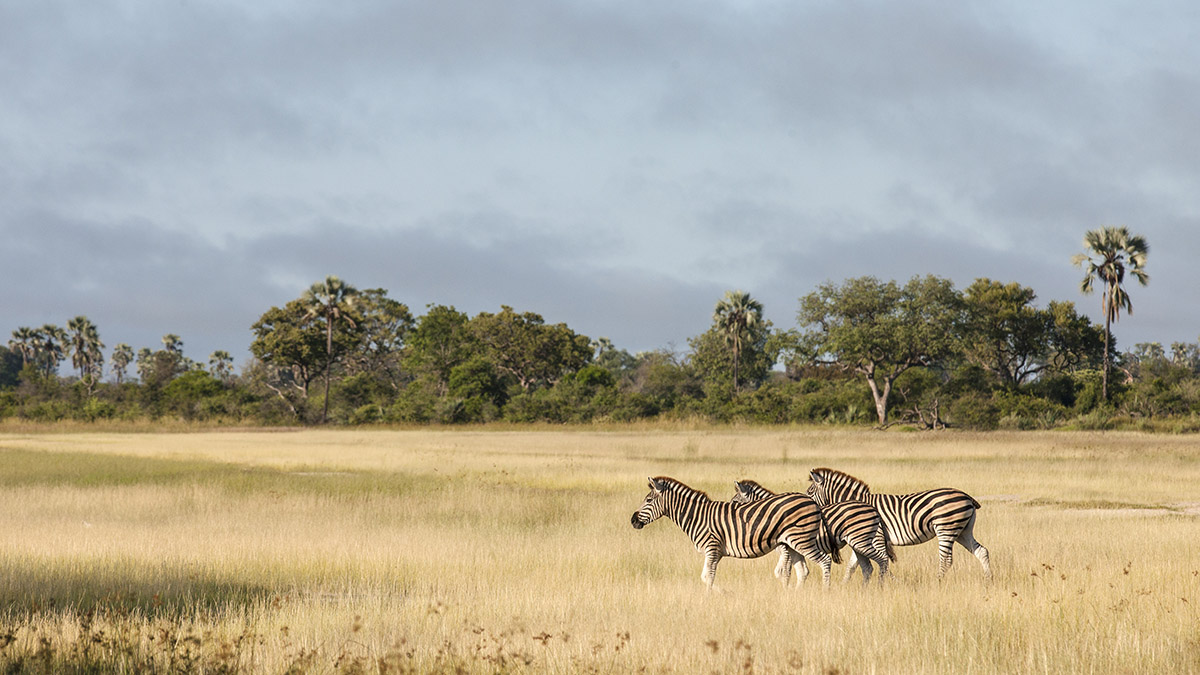 Photo Credit: Botswana Tourism