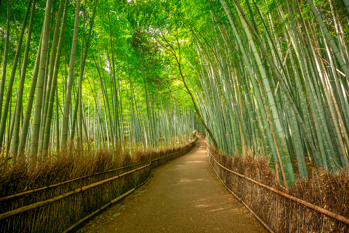 Bamboo Grove | Photo Credit: Japan Tourism