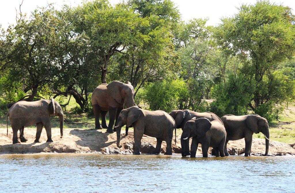 Elephants | Photo Credit: Smruti Smith