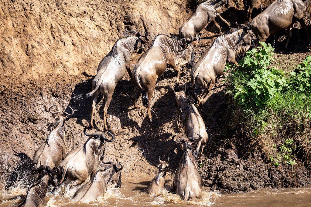 Maasai Mara Game Reserve, Kenya | Photo Credit: Ian Swain II