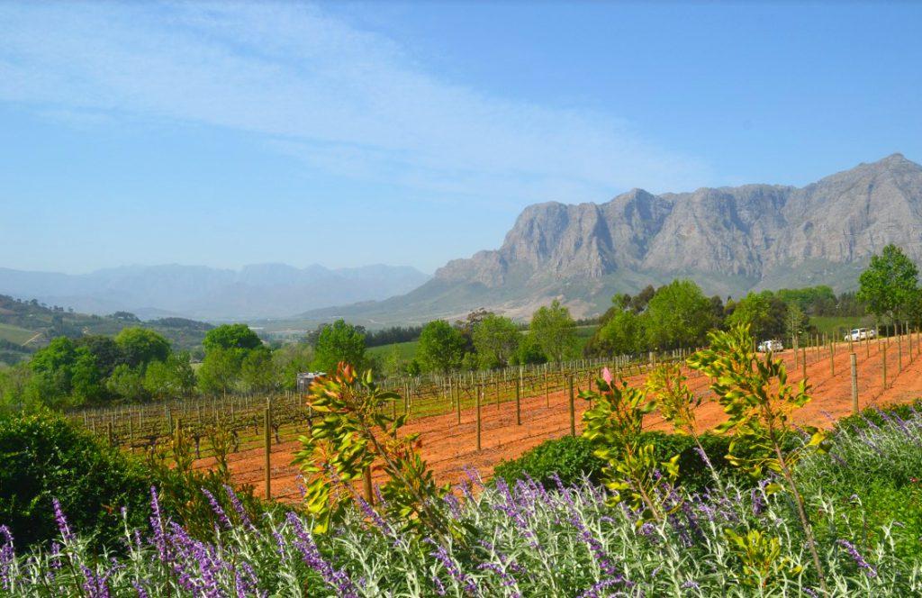 Honeymoon on Safari in South Africa | Photo Credit: Jacqui McDonald