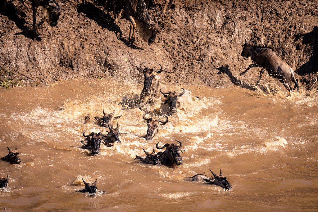 The Great Migration in Kenya | Photo Credit: Ian Swain II