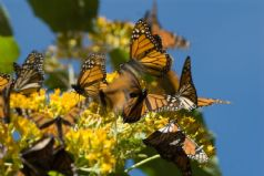 Magical Mexico, Butterfly Biosphere and Ocean Adventure